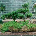 Сад на подносе