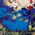 Севастопольский морской аквариум