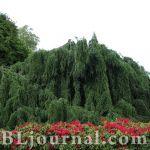 Светлана Волкова: Королевские сады Кью