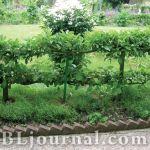 Вечная преграда – садовый бордюр