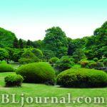 Декоративные особенности древесных растений