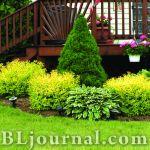 Композиции древесно-кустарниковых растений