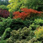 Моноцветные сады