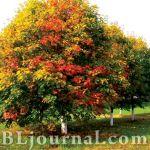 Сад «Красен лист»