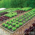 Сад-огород