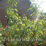 Уход за садом в начале осени