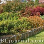 Сад и цветники минимального ухода. Здравствуй, Осень!