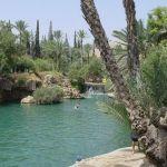Водный сад как оазис спокойствия и природы