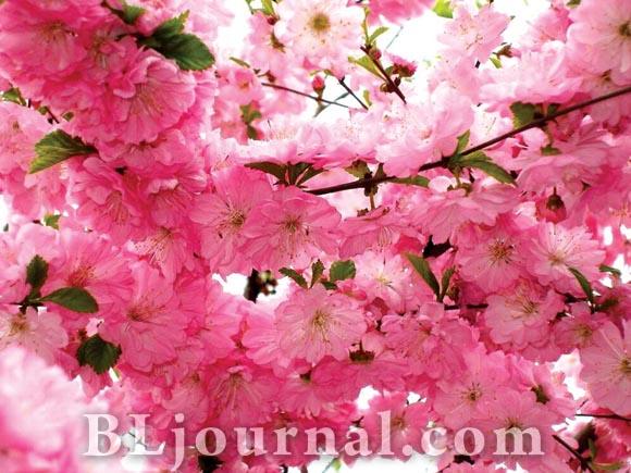 Дизайн розовых цветов