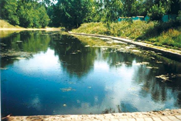 Биологическая очистка водоема
