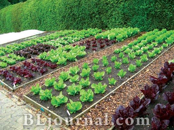 Планировки сада огорода источник